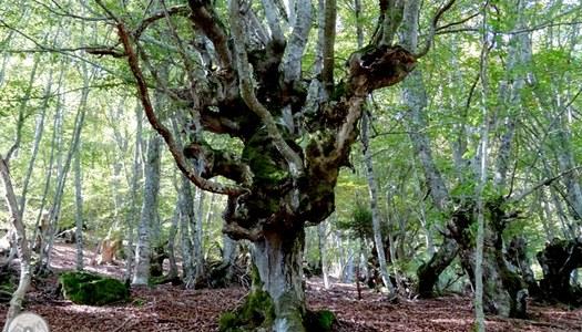Bosc de Carlac